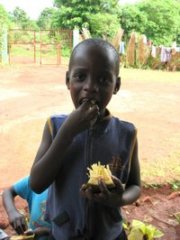 Caesar_eating_jack_fruit