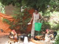 Poultry_farmer