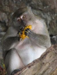 At_monkey_beach_phi_phi_island
