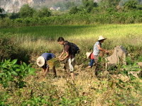 Joe_helping_farmers