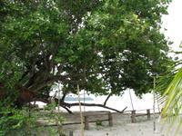 Mystical_tree
