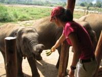 Penny_feeding_the_elephants