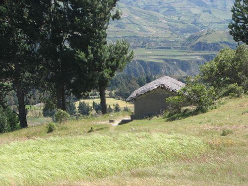 Thatch roof hut in wheat field